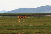 黃河源(扎陵湖、鄂陵湖、牛頭碑):1885173626.jpg