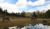 川藏南路 ( 四川的  稻城亞丁、海子山 & 桑堆紅草地 ):1368801833.jpg