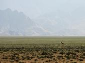 阿爾金山保護區   (庫木庫里沙漠&沙子泉):1187488615.jpg