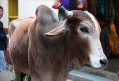 Pushkar(印度):1179833088.jpg