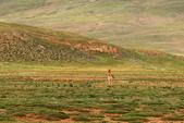 黃河源(扎陵湖、鄂陵湖、牛頭碑):1885173595.jpg