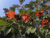 中正大學的晨曦&媽生日:嘉義四大行道樹 :黃花風鈴木、 阿勃勒、台灣欒樹和火焰木。