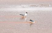 黃河源(扎陵湖、鄂陵湖、牛頭碑):1885173603.jpg