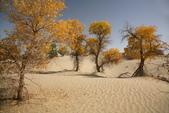 塔里木河(新疆):