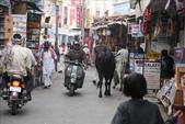 Pushkar(印度):1179833082.jpg