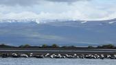 冰島北部: Reykjavik-Hvammstangi-Akureyri:和海豹