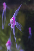 觀賞魚展(湳港展覽館,09/12/'14):