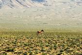 阿爾金山保護區   (庫木庫里沙漠&沙子泉):1187488616.jpg
