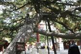 北京:1147246367.jpg