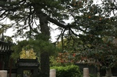 北京:1147246374.jpg