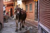 Ranakpur    &  Jodhpur (印度):1629279819.jpg