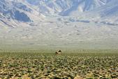 阿爾金山保護區   (庫木庫里沙漠&沙子泉):1187488618.jpg