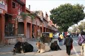 Jaipur(印度):1092279720.jpg