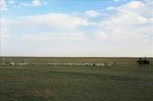 內蒙(呼倫貝爾草原、滿州里):1826483373.jpg
