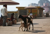 Varanasi(印度):1609217499.jpg