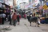 Pushkar(印度):1179833085.jpg