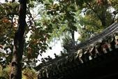 北京:1147246388.jpg