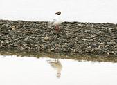 黃河源(扎陵湖、鄂陵湖、牛頭碑):1885173609.jpg