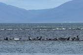 冰島北部: Reykjavik-Hvammstangi-Akureyri:海灣中的沙洲上躺著一排海豹