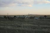 內蒙(呼倫貝爾草原、滿州里):1826483375.jpg