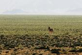 阿爾金山保護區   (庫木庫里沙漠&沙子泉):1187488619.jpg