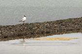 黃河源(扎陵湖、鄂陵湖、牛頭碑):1885173610.jpg