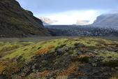 Vik-Skaftafell National Park-Jokulsarlon-Reykjavik:回程猶屢屢不捨啊! ... 繽紛的草甸真是太美了!
