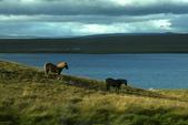 Hvammstangi-Snaefellsjokull 火山國家公園-Reykjavik :冰島馬