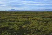 Mývatn (米湖) :冰島極地荒原的夏季末