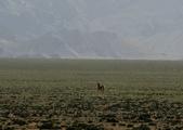 阿爾金山保護區   (庫木庫里沙漠&沙子泉):1187488620.jpg