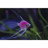 觀賞魚展(湳港展覽館,09/12/'14):相簿封面