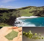 世界上最獨特的12種海灘,美爆了:海灘21.jpg