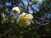 花花草草:台灣蘋果1.jpg