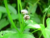 菊科植物:P2160249