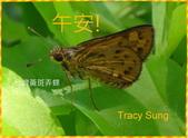 昆蟲問安卡-午安:午安!台灣黃斑弄蝶.jpg