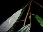 大雪山昆蟲與蜘蛛:DSC07843.JPG