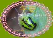 昆蟲問安卡-午安:午安!甘藷龜金花蟲.jpg