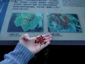 大雪山植物花草:IMG_8655.JPG