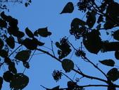 大雪山植物花草:IMG_8688.JPG