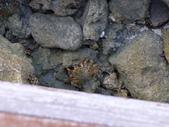 馬爾地夫-瑞僖敦渡假村的生物:L1010155.JPG