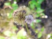 菊科植物:P2160319