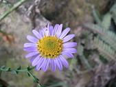 菊科植物:P2130800