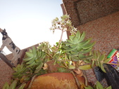 復旦社區園藝花種:DSC03206.JPG