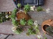 109年,復旦社區新的花草樹木:DSC03133.JPG