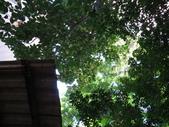 後院種25年的柚子樹首次結果:IMG_8314.JPG