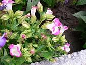 草本類植物:P2070476.JPG