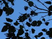 大雪山植物花草:IMG_8689.JPG