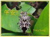 昆蟲問安卡-午安:午安!叉角厲椿.jpg