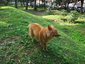 愛犬再次失蹤一天一夜:DSC00035.JPG