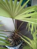老友台北家盆栽植物:13807.jpg